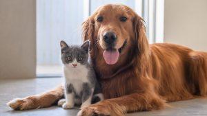 perro y gato acostados