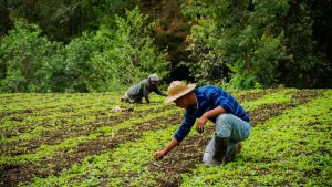 Agricultores en Guatemala